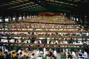 Row upon row of exploited factory workers